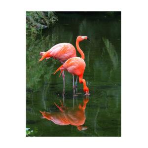 flamingi w wodzie