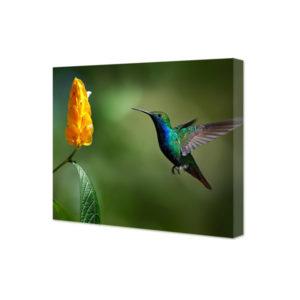 Obraz na płótnie koliber w locie