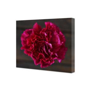 Obraz na płótnie różowy goździk