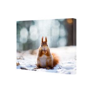 Obraz na płótnie wiewiórka na śniegu
