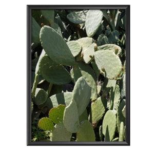 Plakat greckie kaktusy