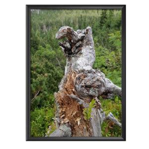 Plakat konar drzewa