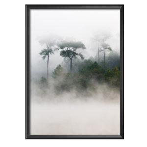 Plakat poranna mgła nad lasem sosnowym