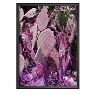 Plakat różowe kaktusy