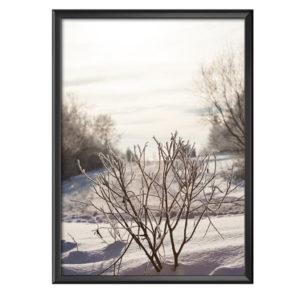Plakat zamarznięty krzak w zimowym scenerii
