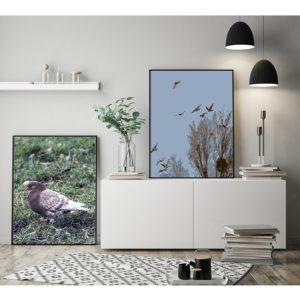 Plakat gołębie w locie oraz Plakat brązowy gołąb na trawiewizualizacja