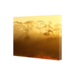 Obraz na płótnie poranna mgła nad lasem