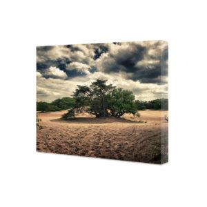 Obraz na płótnie stare drzewo na pustyni
