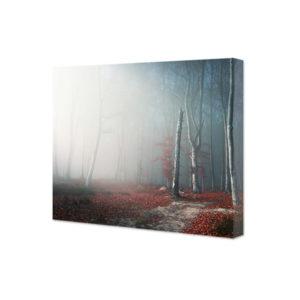 Obraz na płótnie światło przedzierające się przez mgle w jesiennym lesie
