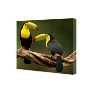 obraz na płótnie tukany na gałęzi