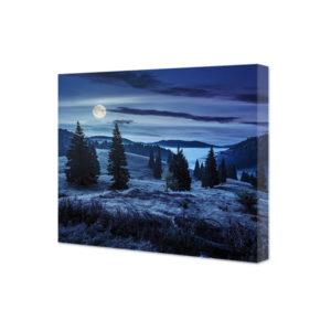 Obraz na płótnie zbocze lasu oświetlone księżycem