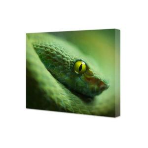 Obraz na płótnie zielony wąż