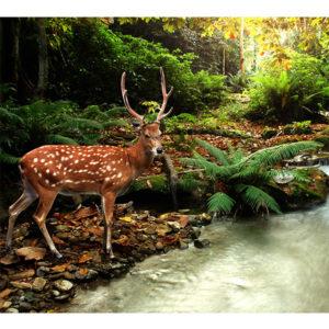 Obraz jeleń nad leśnym potokiem