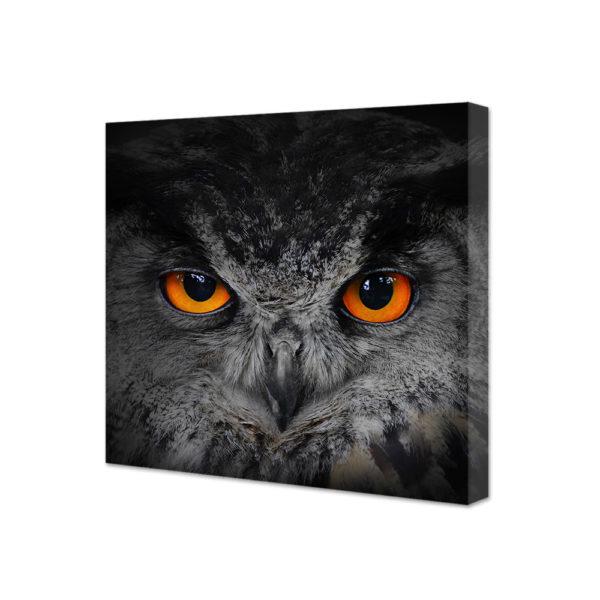Obraz na płótnie oczy sowy - puchacz
