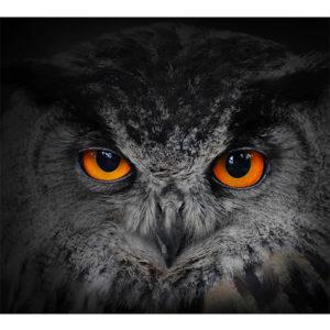 Obraz oczy sowy - puchacz