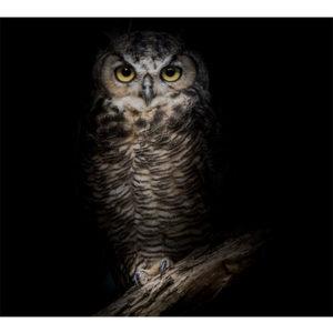 Obraz sowa na konarze w nocy